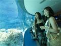 青の洞窟&沖縄美ら海水族館