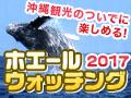 沖縄ホエールウォッチング2017
